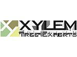 Xylem Tree